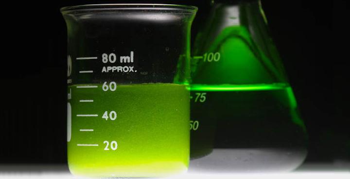 Biocarburants à base d'algues: ExxonMobil entrevoit la possibilité de produire 10 000 barils par jour d'ici 2025