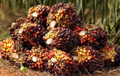 Total invité à réduire significativement l'utilisation d'huile de palme dans la production de ses biocarburants en France