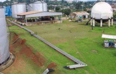 Cameroun: les actionnaires de la SCDP vont se répartir des dividendes d'environ 228 600 euros pour l'exercice 2017