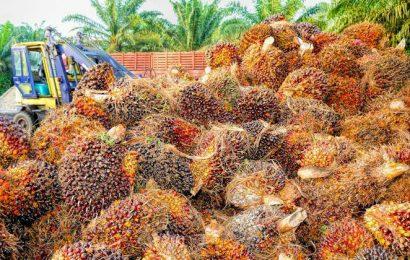 Pourquoi toujours plus d'huile de palme dans l'essence française ? Plaidoyer pour le bioéthanol français