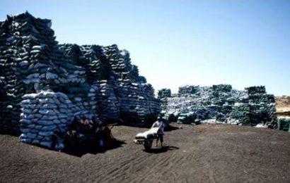 Des cargaisons illicites de charbon de bois somalien transitent par l'Iran pour les Emirats arabes unis ou Oman (ONU)