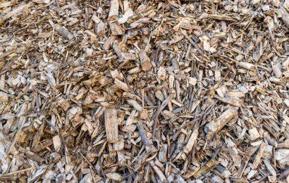 Gabon : un projet du PNUD pour la transformation des déchets agricoles et forestiers en énergie