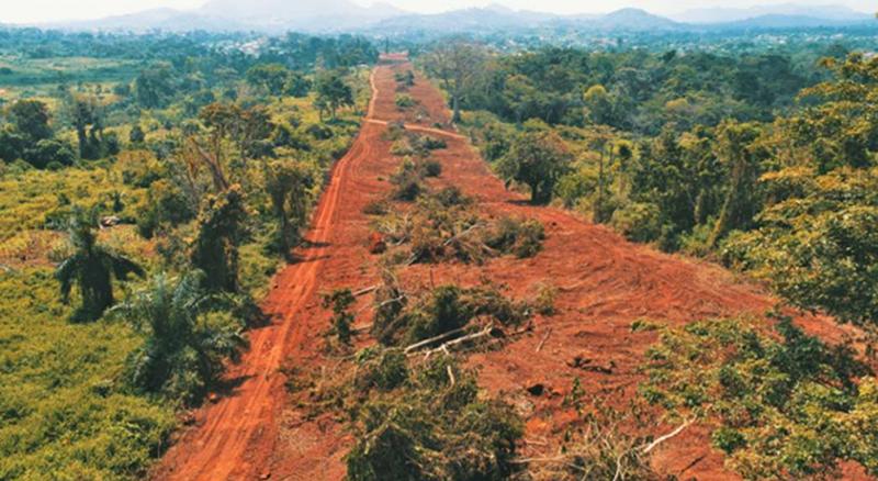 """Cameroun : le bois coupé le long de la ligne de transport d'électricité du projet Nachtigal sera remis au Minfof et """"à la population locale"""" (NHPC)"""