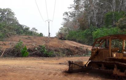 Cameroun: le nettoyage des lignes envahies par la végétation permet de réduire les coupures d'électricité (Eneo)