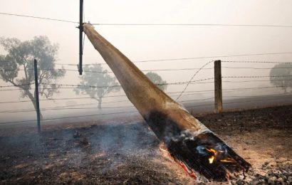 Cameroun: Eneo lie aussi les feux de brousse aux coupures d'électricité vécues par les populations