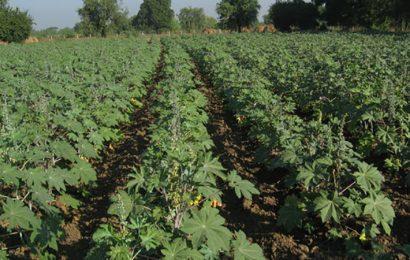 Congo/biocarburants: accord pour un projet industriel de plantations de ricin sur plus de 150 000 hectares